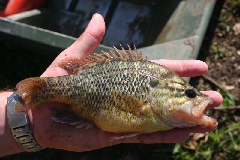 lake fishing sunfish